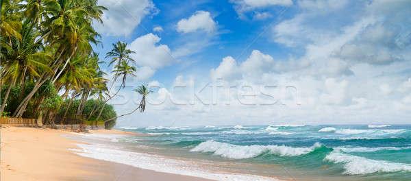 Gyönyörű óceán trópusi pálmafák tengerpart festői Stock fotó © alinamd