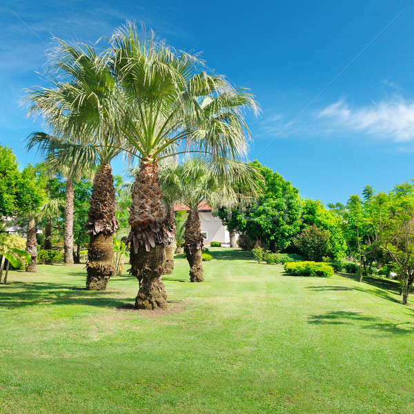 Tropical palm trees in a beautiful park Stock photo © alinamd