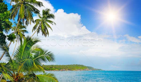 Kokosnoot palmen oceaan wal strand water Stockfoto © alinamd