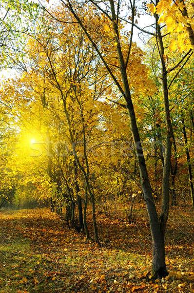 Najaar bos zonsondergang Geel bladeren weg Stockfoto © alinamd