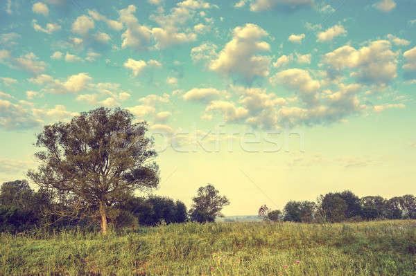Vintage photo with tree and clouds in summer Stock photo © AlisLuch