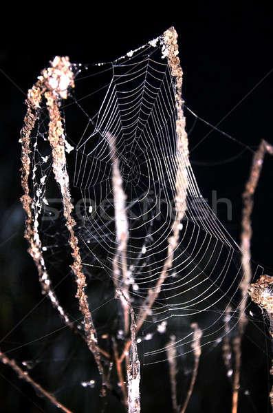 Spinneweb gras zwarte nacht textuur Stockfoto © AlisLuch