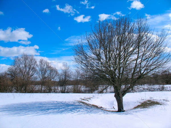 весны пейзаж дерево тень облака Сток-фото © AlisLuch