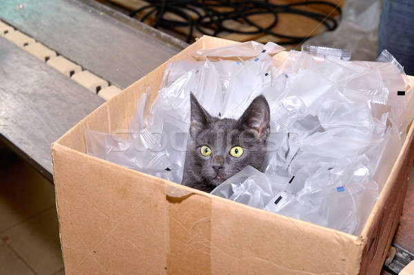 Black cat sitting in a cardboard box including packing bags fact Stock photo © AlisLuch