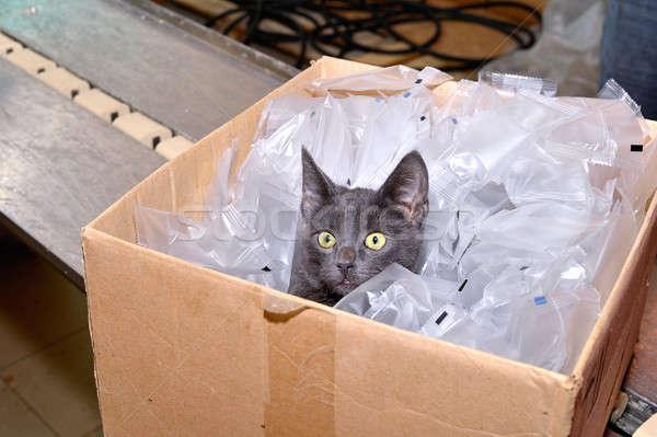 黒猫 座って 袋 事実 ストックフォト © AlisLuch