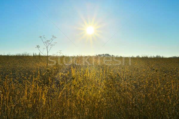 Sunrise over a field Stock photo © AlisLuch