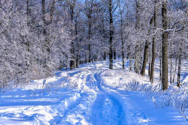зима пейзаж дороги лес Колеса снега Сток-фото © AlisLuch