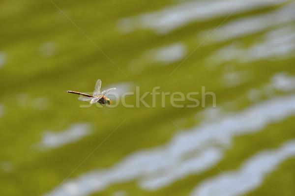 Szitakötő közelkép repülés víz fókusz fej Stock fotó © AlisLuch