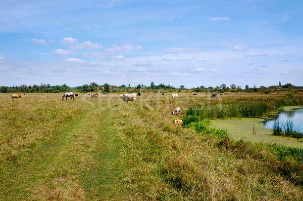 коров лошадей небе облака трава Сток-фото © AlisLuch