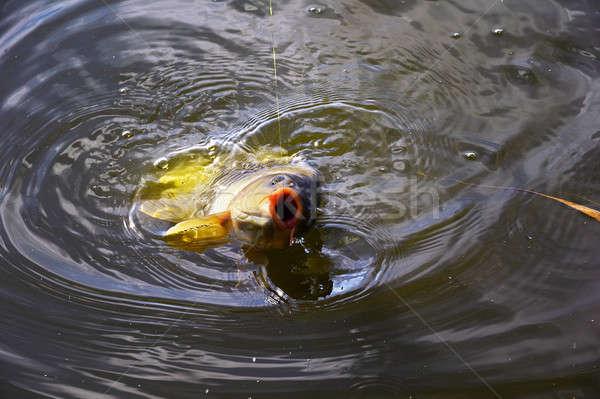 Karpfen Köder Wasser Angelrute Haken Stock foto © AlisLuch