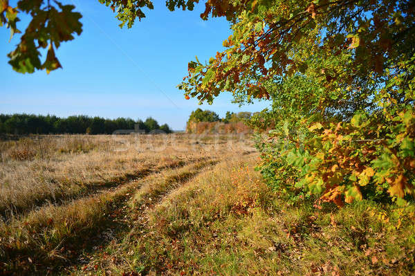 View autumn meadow and a dirt road through the branches of a tre Stock photo © AlisLuch