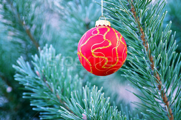 The red sphere hangs on a fir-tree close up Stock photo © AlisLuch