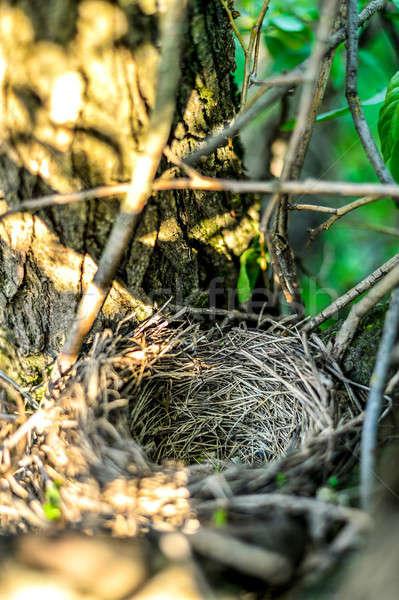 пусто птиц гнезда дерево дома Сток-фото © AlisLuch