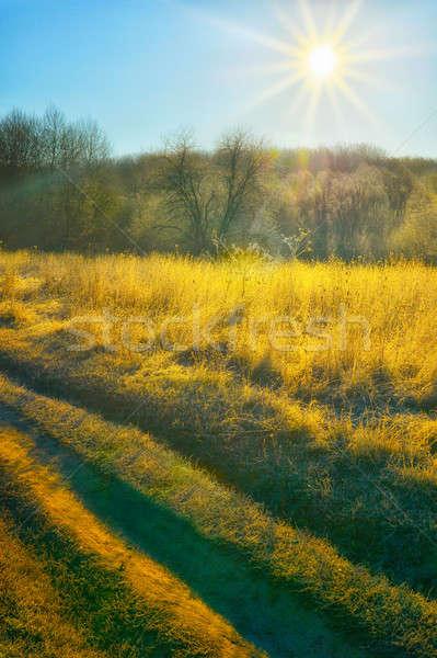 秋 太陽 フィールド 道路 草 風景 ストックフォト © AlisLuch