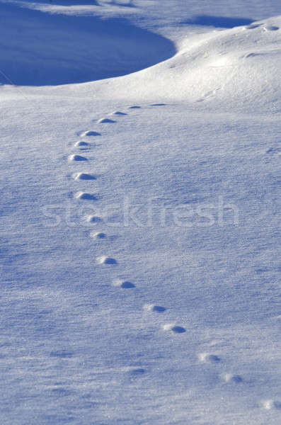 The pattern of animal tracks in the snow Stock photo © AlisLuch
