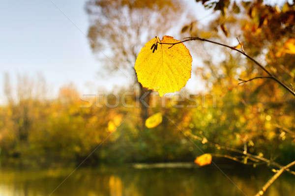осень лист реке Сток-фото © AlisLuch