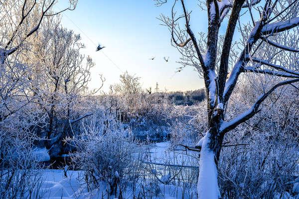 冬 風景 鳥 ツリー ストックフォト © AlisLuch