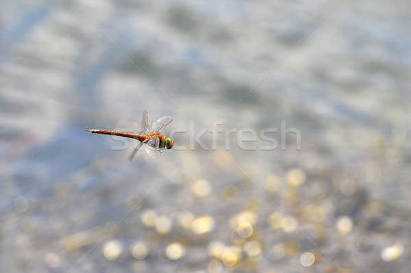 Dragonfly close up flying over the water Stock photo © AlisLuch