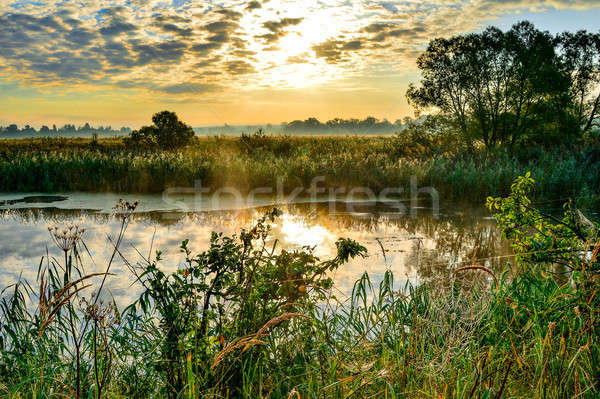 Photo with a sunny summer sunrise over the river Stock photo © AlisLuch