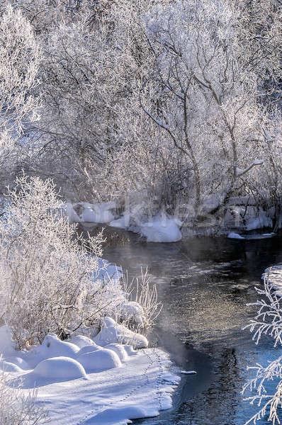 Kış güneşli manzara nehir orman doku Stok fotoğraf © AlisLuch