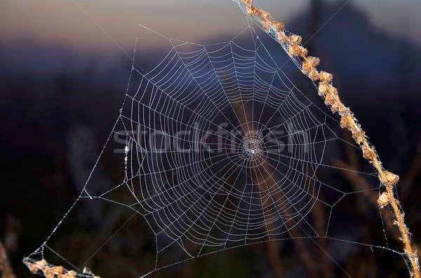 örümcek ağı web çayır bitki ağ Stok fotoğraf © AlisLuch