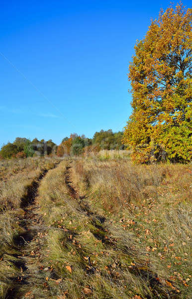 Dirt road in a meadow in autumn Stock photo © AlisLuch