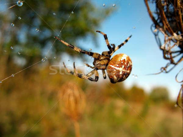 Aranha teia da aranha chuva textura natureza fundo Foto stock © AlisLuch