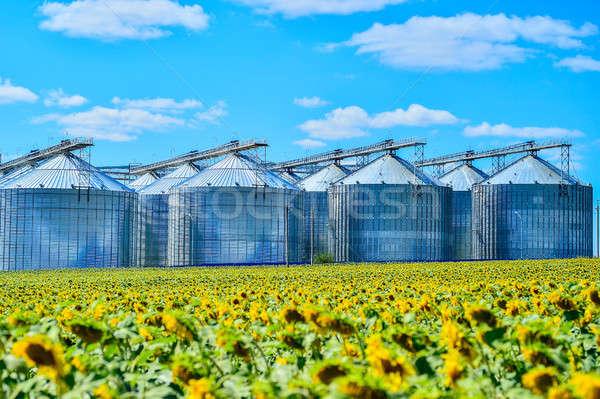 Ayçiçek yağı üretim bitki ayçiçeği alan gökyüzü Stok fotoğraf © AlisLuch