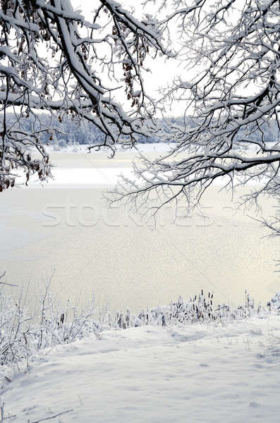Winter landscape: the view through the frame of the snowy branch Stock photo © AlisLuch