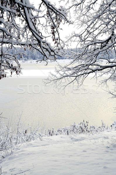 冬 風景 表示 フレーム 支店 海岸 ストックフォト © AlisLuch