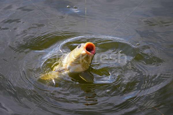 鯉 餌 水 釣り竿 フック ストックフォト © AlisLuch
