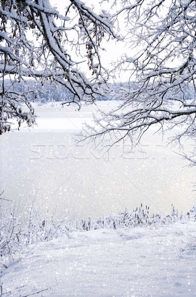 Winter background.  View through the frame of the snow-covered b Stock photo © AlisLuch