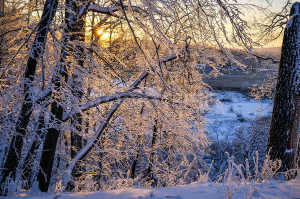 Sunset John Tkhe Woody betveen Tkhe trees Ying Winter period Stock photo © AlisLuch