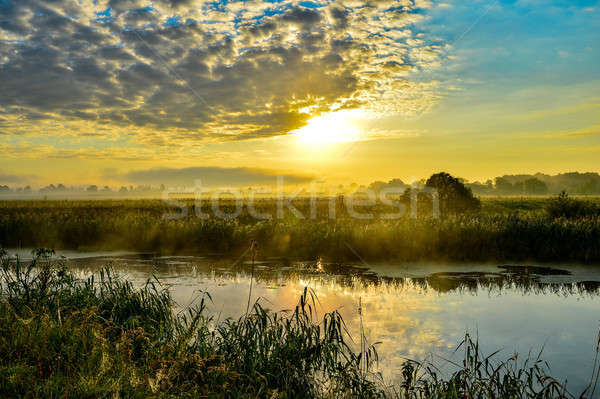 Photo with a summer sunrise and a tree Stock photo © AlisLuch