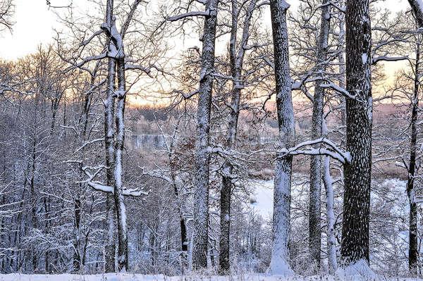 明るい 冬 風景 木 森林 日の出 ストックフォト © AlisLuch