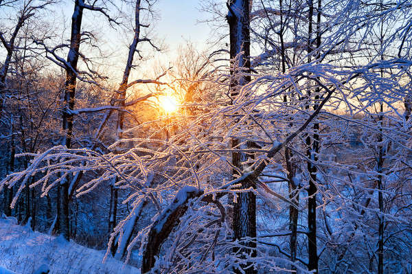 winter landscape in the forest with the morning sun Stock photo © AlisLuch