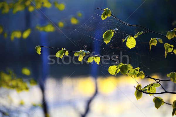 örümcek ağı gün batımı bahar güneş Stok fotoğraf © AlisLuch