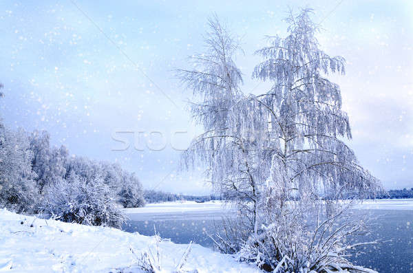 Winter landscape with trees, covered with hoarfrost and lake vie Stock photo © AlisLuch