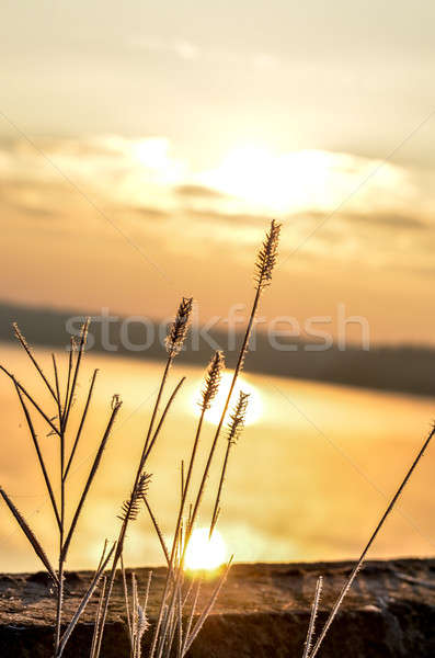 Dry reed bending over the water. Retro style. Stock photo © AlisLuch