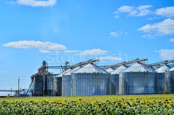 óleo de girassol produção planta girassol campo céu Foto stock © AlisLuch