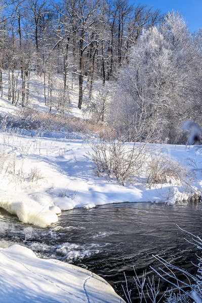 Winter sunny landscape with river and forest Stock photo © AlisLuch
