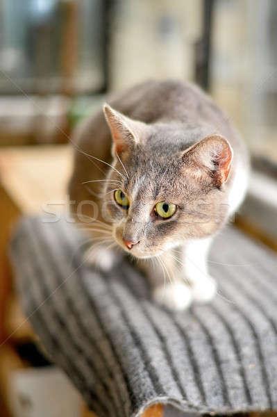 Stock photo: Gray striped cat looks sad at camera