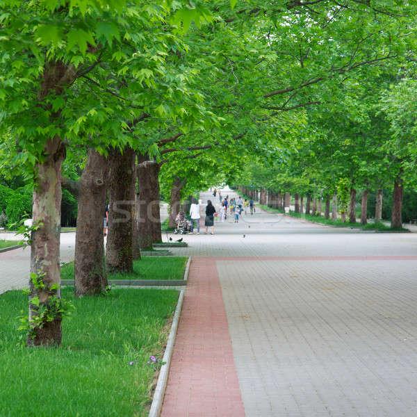 Largo callejón parque verde árboles árbol Foto stock © All32