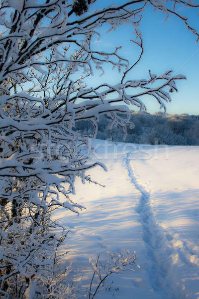 Path in snow. Stock photo © All32
