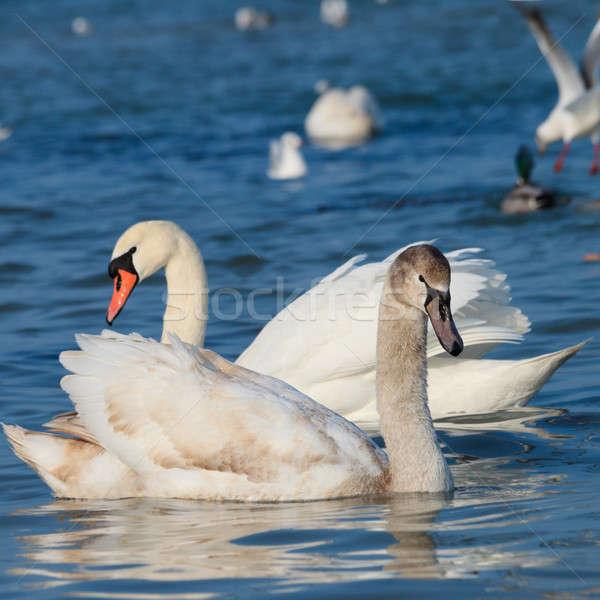 美しい 白 水 海 美 ストックフォト © All32
