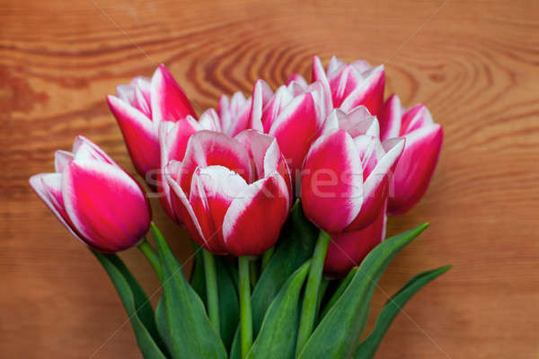 Bouquet of beautiful tulips Stock photo © All32