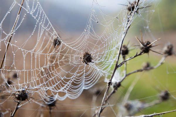 Spinneweb dauw opknoping drogen gras spin Stockfoto © All32