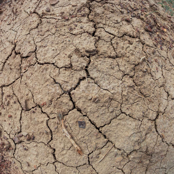The dry cracked earth Stock photo © All32