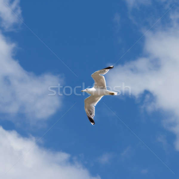 Stock photo: Flying seagull on the blue sky background