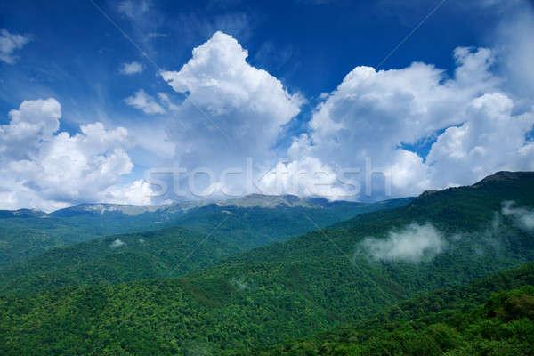 Zöld erdő kék ég felhők tájkép levél Stock fotó © All32